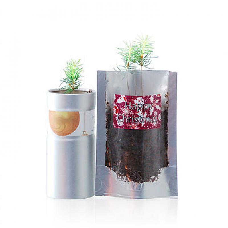 Promotional Grow Your Own Christmas Tree. Printed Desk Top ...
